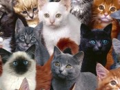 Чего хотят кошки