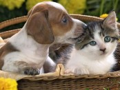 Товары для домашних животных в Москве с доставкой - обзор компании Zoo Family