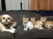 Отважный кот Нянкити, пес обожающий кошек Мун и просто веселые танцующие кошки