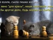 1523634180_kotomatricy-37