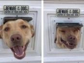 Животные чьи снимки гарантированно поднимут настроение (19 фото)