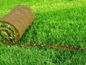 Рулонный газон Киев - обзор предложений компании Виденфлора