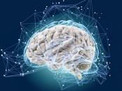 Тест: Насколько быстро работает Ваш мозг? Проверьте с помощью пяти простых вопросов