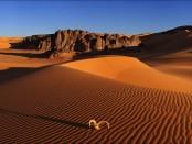 Зачем правящие элиты превращают Землю в пустыню