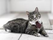 Кошки стабильно увеличиваются в размерах начиная со времен викингов