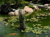 Где купить оборудование для аквариумов и прудов в Украине с доставкой