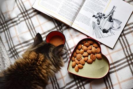 Как правильно кормить кошку, чтобы питомец был здоровый и прожил много лет
