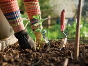 Как посадить фруктовые и овощные культуры - где найти вспомогательный контент