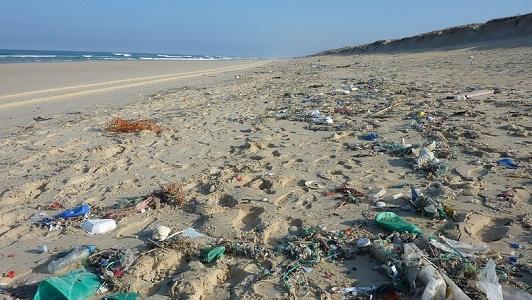 Чёрное море опасно для здоровья людей - экологи рассказали причины