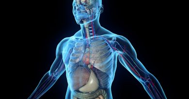 Мифы о теле человека, в которые многие из нас верят