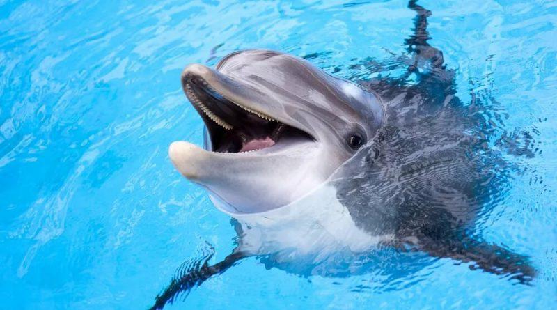 В Николаевской области спасил дальфина