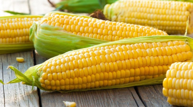 Где купить семена кукурузы в Украине и от чего зависит урожай