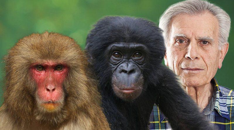 В китайской лаборатории создан первый в мире гибрид обезьяны и человека