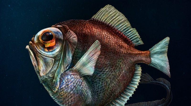 Найти отличия на фото рыб и павлинов удается 40% - попробуйте пройти тест